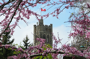 University College Tower through purple flowers